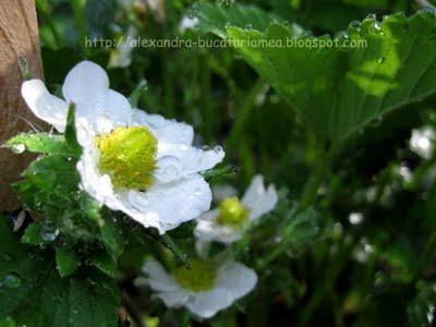 Grădina mea de la munte (1)