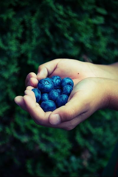 Diversificarea – Arome pentru bebeluşi de la 8-10 luni